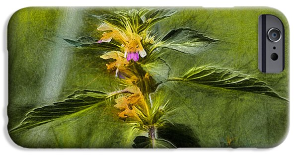Paiting iPhone Cases - Artistic paiterly Nettle On Top Yellow Flower With Lilac Skirt Looking Forward iPhone Case by Leif Sohlman
