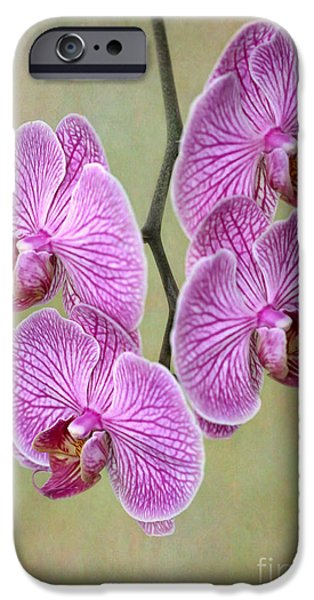 Floral Photographs iPhone Cases - Artsy Phalaenopsis Orchids iPhone Case by Sabrina L Ryan