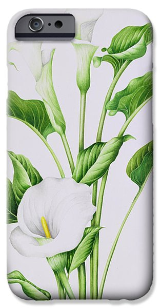 Botanical Paintings iPhone Cases - Arum Lily iPhone Case by Sally Crosthwaite