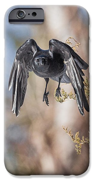Crow iPhone Cases - As The Crow Flies iPhone Case by Bill  Wakeley