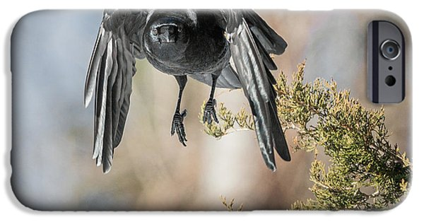 Crow iPhone Cases - As The Crow Flies Square iPhone Case by Bill  Wakeley