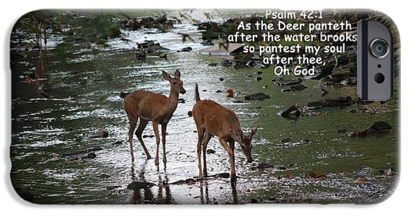 Southern Indiana iPhone Cases - As the Deer Pants for Water iPhone Case by Lorna Rogers Photography