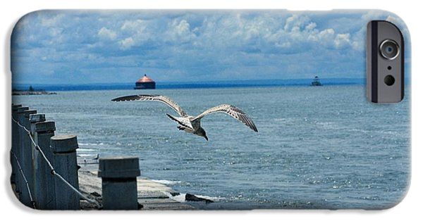 Flying Seagull iPhone Cases - As The Seagull Flies iPhone Case by Gothicolors Donna Snyder