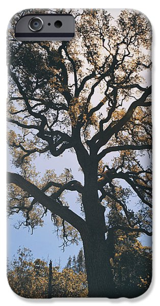 As We Grow and Change iPhone Case by Laurie Search