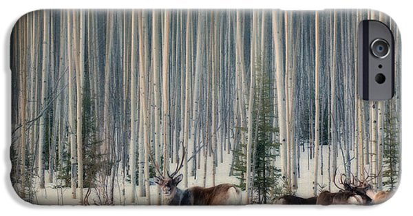 Ground iPhone Cases - Caribou and trees iPhone Case by Priska Wettstein