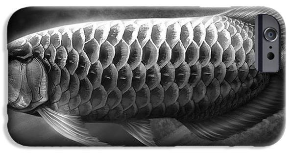 Asian iPhone Cases - Asian Arowana_01 iPhone Case by Javier Lazo