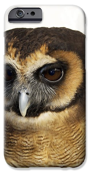 Birds iPhone Cases - Asian Brown Wood Owl iPhone Case by Skip Willits