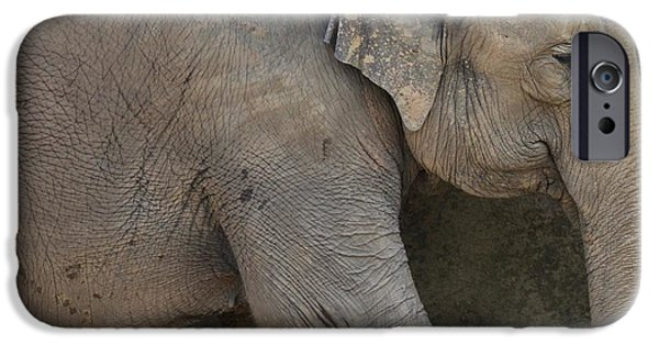 Elephant iPhone Cases - Asian Elephant iPhone Case by Dan Sproul