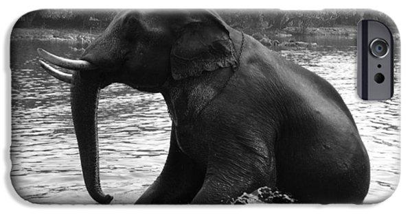 Elephants iPhone Cases - Asian Elephant iPhone Case by Sheela Ajith