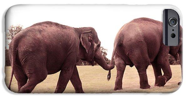 Elephant iPhone Cases - Asian Elephants Elephas Maximus iPhone Case by Eden Baed