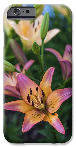 Asiatic Lily iPhone Cases - Asiatic Lillies iPhone Case by Mark Papke