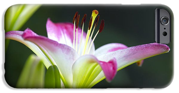 Asiatic Lily iPhone Cases - Asiatic Lily Lollipop 2 iPhone Case by Sharon  Talson