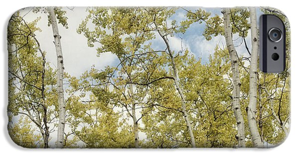 Forest iPhone Cases - Aspen Forest In Spring iPhone Case by Priska Wettstein
