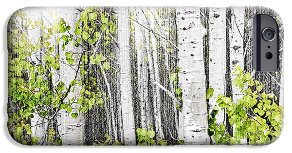Young Photographs iPhone Cases - Aspen grove iPhone Case by Elena Elisseeva