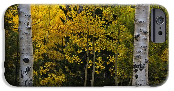 Turning Leaves iPhone Cases - Aspen Light iPhone Case by Dave Dilli