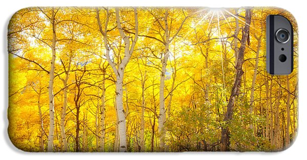 Fall Season iPhone Cases - Aspen Morning iPhone Case by Darren  White