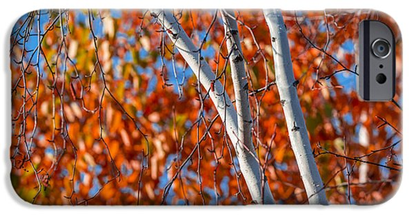 Autumn iPhone Cases - Aspen iPhone Case by Sebastian Musial