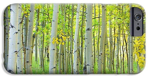 James Bo Insogna iPhone Cases - Aspen Tree Forest Autumn Time  iPhone Case by James BO  Insogna