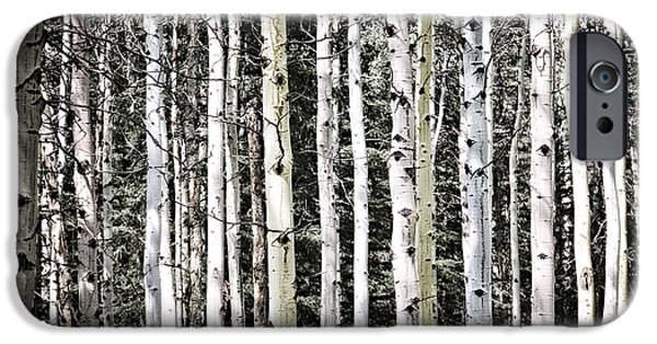 Forest iPhone Cases - Aspen tree trunks iPhone Case by Elena Elisseeva