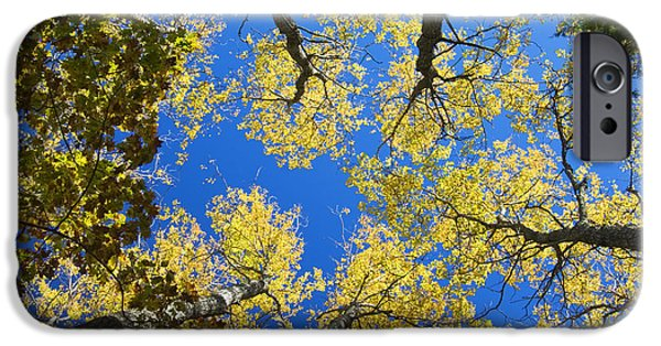 Autumn Woods iPhone Cases - Aspen Trees And Blue Sky iPhone Case by Keith Webber Jr