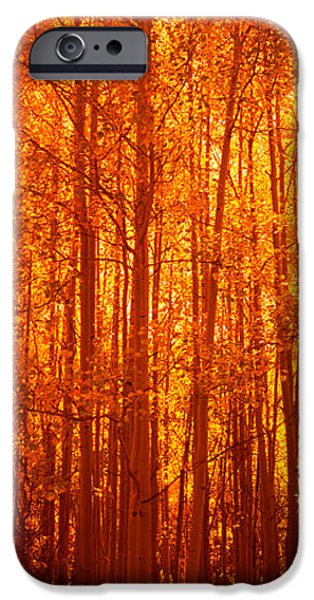 Autumn iPhone Cases - Aspen Trees At Sunrise In Autumn iPhone Case by Panoramic Images