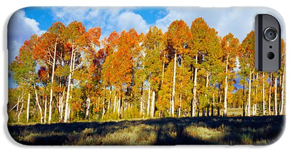 Autumn iPhone Cases - Aspen Trees In Autumn, Dixie National iPhone Case by Panoramic Images