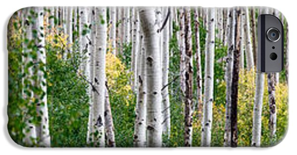 Aspen iPhone Cases - Aspen Trees iPhone Case by Steve Gadomski