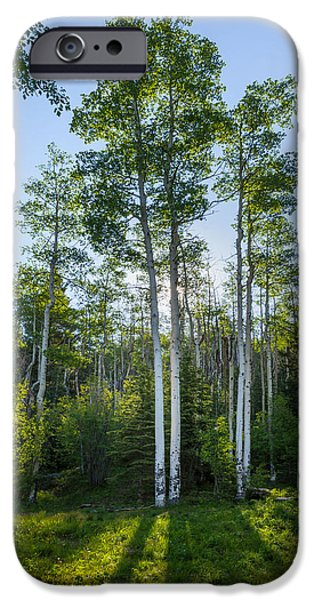 Bark iPhone Cases - Aspens At Sunrise 1 - Santa Fe New Mexico iPhone Case by Brian Harig