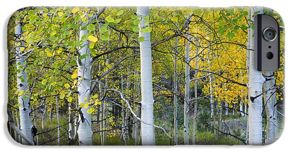 Fall iPhone Cases - Aspens In Autumn 6 - Santa Fe National Forest New Mexico iPhone Case by Brian Harig