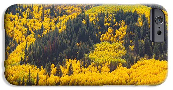 Mountain iPhone Cases - Aspens In Autumn Near Rico, Colorado iPhone Case by Panoramic Images
