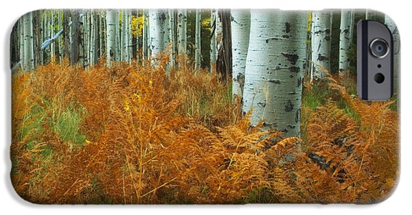 Peter James Nature Photography iPhone Cases - Aspens in the Ferns iPhone Case by Peter Coskun