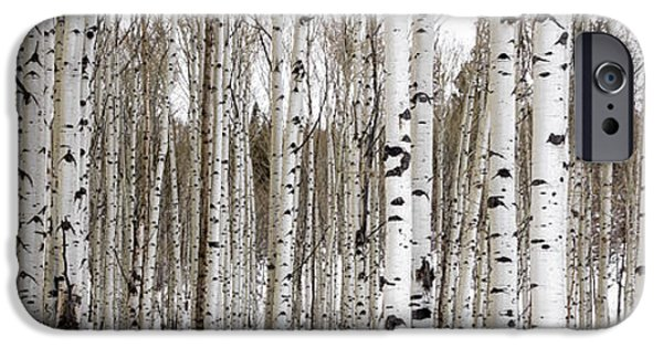 Scenic Photo Photographs iPhone Cases - Aspens In Winter Panorama - Colorado iPhone Case by Brian Harig