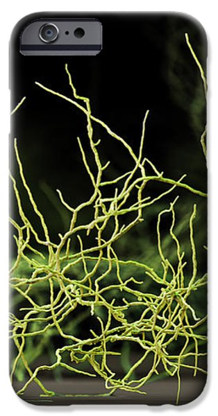 Aspergillus Niger Fungus Sem iPhone Case by Eye of Science