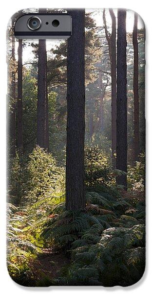 Aspley iPhone Cases - Aspley woods iPhone Case by David Isaacson