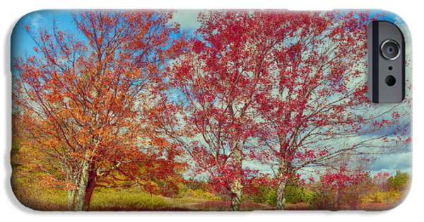 Tree Art Print iPhone Cases - Astonishing Autumn - Fall Colors at Dolly Sods I iPhone Case by Dan Carmichael