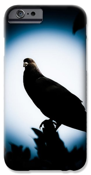 Astral iPhone Cases - Astral Pigeon iPhone Case by Loriental Photography