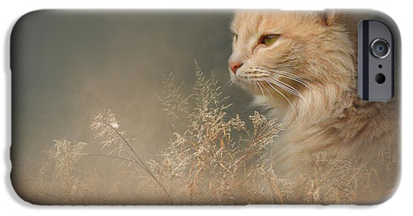 Orange Tabby iPhone Cases - At Dawn iPhone Case by Jai Johnson