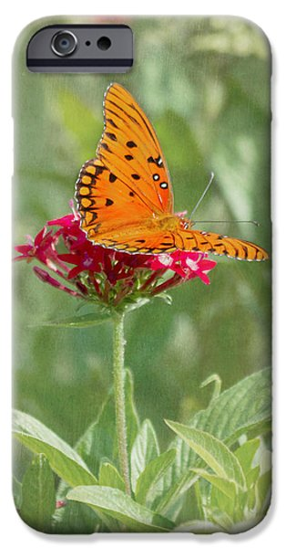 At Rest - Gulf Fritillary Butterfly iPhone Case by Kim Hojnacki