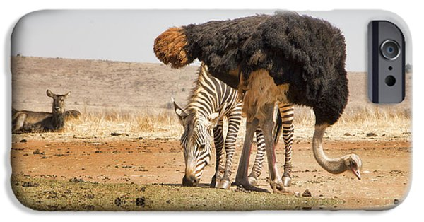 Ostrich iPhone Cases - At the Waterhole V3 iPhone Case by Douglas Barnard