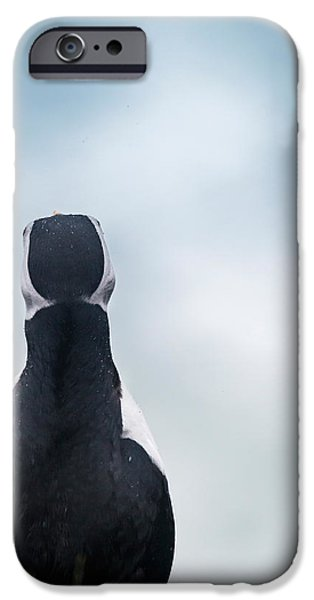 Seabird iPhone Cases - Atlantic Puffin Fratercula Arctica iPhone Case by Panoramic Images