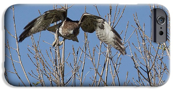Redtail Hawk iPhone Cases - Attack iPhone Case by Ernie Echols