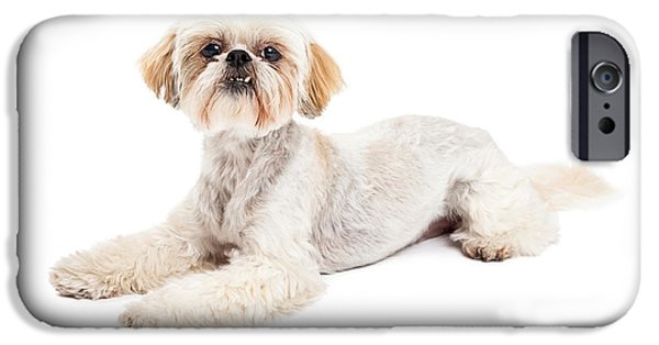 Maltese iPhone Cases - Attentive Maltese and Poodle Mix Dog Laying iPhone Case by Susan  Schmitz