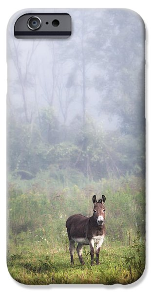 Gary Heller iPhone Cases - August morning - Donkey in the field. iPhone Case by Gary Heller