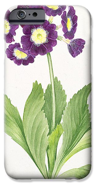 Botanical iPhone Cases - Auricula iPhone Case by Sally Crosthwaite