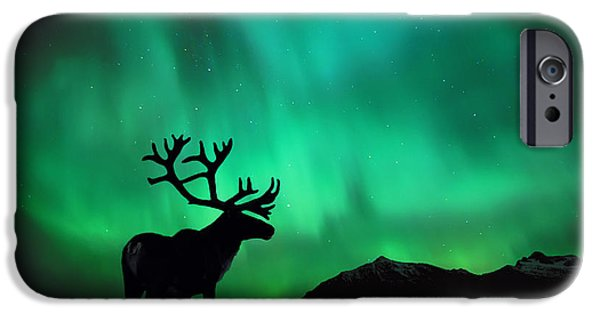 Recently Sold -  - Fauna iPhone Cases - Aurora Caribou iPhone Case by John Hyde