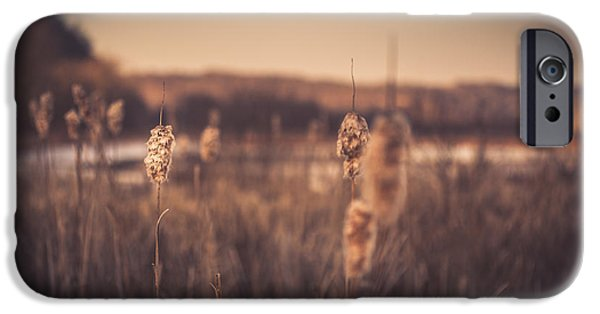 Cattails iPhone Cases - Aurous iPhone Case by Shane Holsclaw