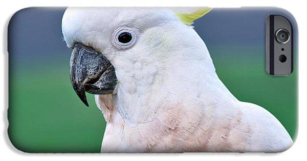 Cockatoo iPhone Cases - Australian Birds - Cockatoo iPhone Case by Kaye Menner