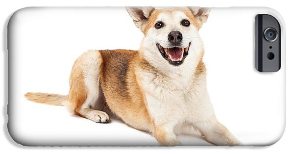 Cattle Dog iPhone Cases - Australian Cattle and Shiba Inu Mix Dog Laying iPhone Case by Susan  Schmitz