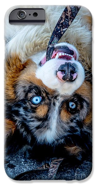 Recently Sold -  - Dog Close-up iPhone Cases - Australian Shepherd iPhone Case by Cheryl Baxter