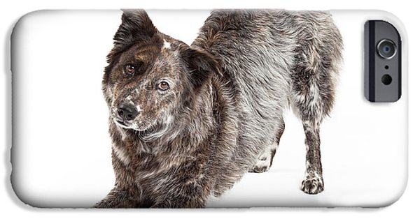 Animals Photographs iPhone Cases - Australian Shepherd Mix Breed Dog Bowing iPhone Case by Susan  Schmitz